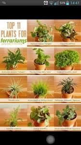 terrarium plants how to care for succulents terraria plants