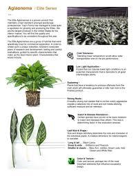 Tropical Plant Diseases - capri farms slideshow capri farms a source of fine tropical
