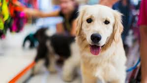 california passes law requiring pet stores to sell rescue animals