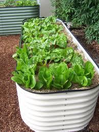 best vegetable garden layout raised vegetable garden beds corrugated iron ktactical decoration