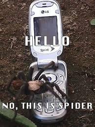Misunderstood Spider Meme 16 Pics - 16 best spiders images on pinterest ha ha funny stuff and funny