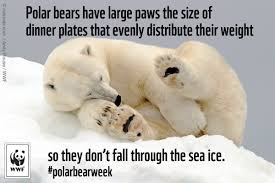 Truth Bear Meme - share the arctic