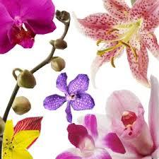 Orchids Care Care