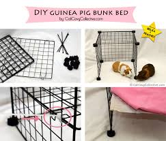Dog Bunk Beds Furniture by Cali Cavy Collective A Blog About All Things Guinea Pig How To