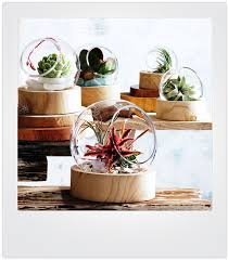 sphera 2 pc round glass terrarium nova68 com