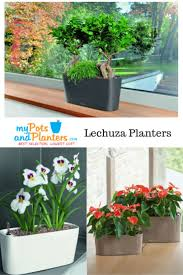 self watering planter 36 best lechuza planters images on pinterest modern planters