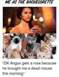 Bachelorette Meme - meas the bachelorette ok angus gets a rose because he brought me a