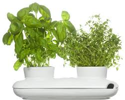 duo herb pot modern indoor pots and planters by sagaform inc