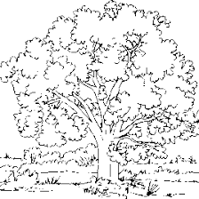 coloring pages for adults tree tree coloring pages for adults all about coloring pages literatured