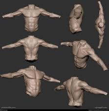 Human Anatomy Reference 92 Best Anatomy Reference Images On Pinterest Anatomy Reference