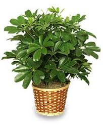 10 houseplants poisonous to dogs cats or children