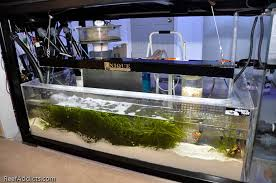 best led refugium light a brief overview of the 400g s gear melev s reef