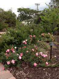 botaniscapes by tracey blog archive xeriscape ideas for san
