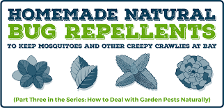 homemade natural bug repellents to keep mosquitoes and other