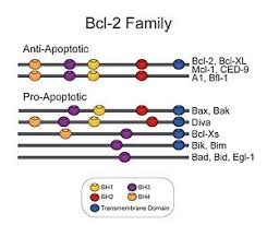 bad bid bcl 2 family