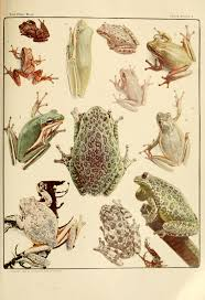 file frog book 1906 color plate 10 jpg wikimedia commons