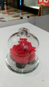 Forever Rose In Glass Dome 11 Best Variado Images On Pinterest Plants Flowers And Nice