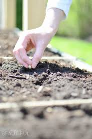 How To Plant A Raised Vegetable Garden by Diy Raised Square Foot Garden A Burst Of Beautiful