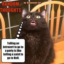 Random Cat Meme - party like it s 1999 degrees lolcats lol cat memes funny