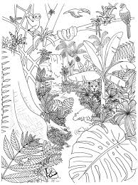 rainforest plants coloring pages rainforest plants rainforest