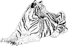 realistic tiger coloring pages realistic coloring pages spesific