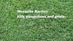 mosquito control spray cutter backyard bug control youtube