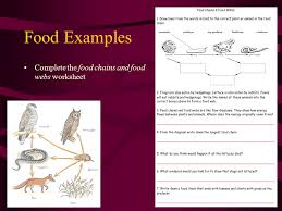 food chains u0026 food webs d crowley ppt video online download
