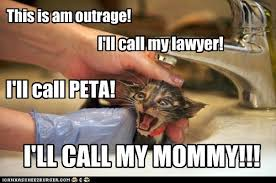 Lawyer Cat Meme - this is am outrage lolcats lol cat memes funny cats funny