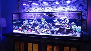 Beautiful Home Fish Tanks by Saltwater Fish Tank Reef Aquarium Myreefliving Ben 200 Gallon