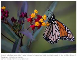 for the monarch butterfly a road back way for monarchs