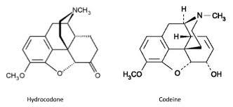 Obat Oxycodone hydrocodone vs oxycodone vs morphine
