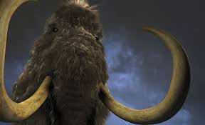 woolly mammoth woolly mammoths worked