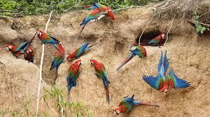 birds tag wallpapers hawks birds sweet wallpaper hd flowers