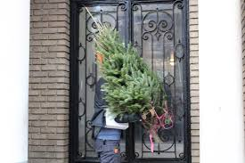 tree free delivery anywhere in new york city