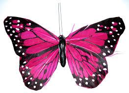 pink butterfly clip art butterfly pink by kuschelirmel stock