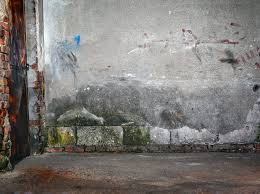 mold removal u0026 remediation nashville ace mold