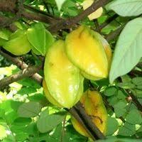 Blackmoor Fruit Trees - the 25 best fruit trees for sale ideas on pinterest fruit tree