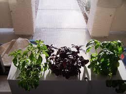 window herb harden build your own hydroponic window herb garden system