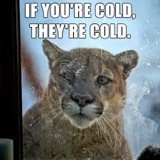 Freezing Cold Meme - if you re cold they re cold know your meme