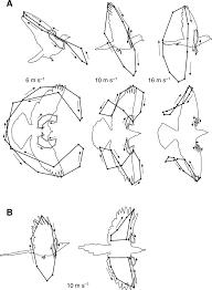 biomechanics of bird flight journal of experimental biology