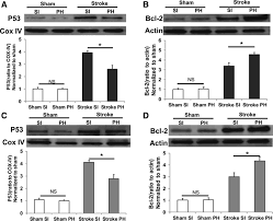cgi si e social inhibition of mitochondrial p53 abolishes the detrimental effects of