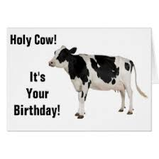 cow greeting cards cow cards greeting photo cards zazzle