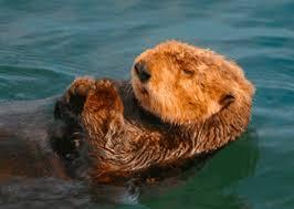 sea otter 3d lenticular postcard greeting card
