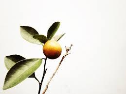 free images branch blossom fruit leaf flower food green