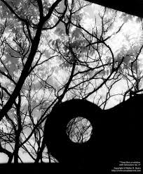trees black white photo gallery by walter b myers