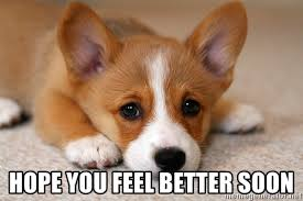 Feel Better Meme - hope you feel better soon sad corgi meme generator