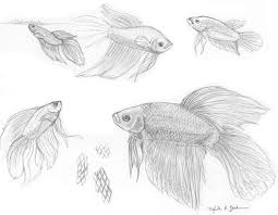 fish studies betta by foxfeather248 on deviantart