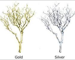 manzanita branches for sale manzanita branches etsy