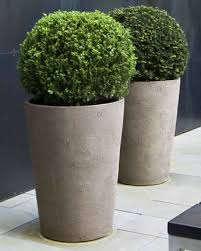 best 25 boxwood topiary ideas on boxwood planters