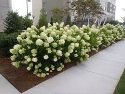 arkansas ornamental shrubs